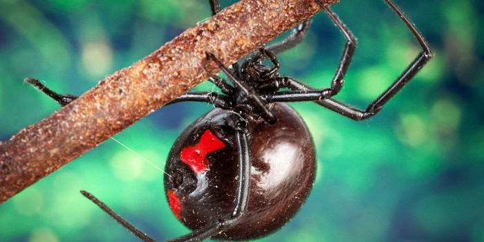 10 Most Lethally Poisonous Spiders In The World
